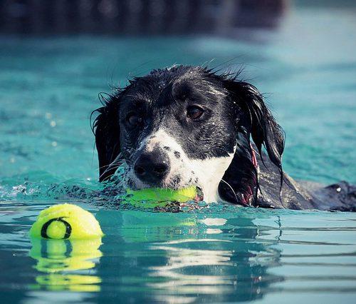dog-2633227_640-schwimmen-3