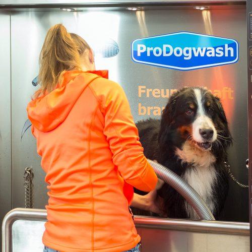 prodogwash_064